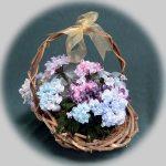 スクエアーリボンアート®282紫陽花バスケット
